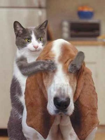 Para Merche (el gato en el tejado)........